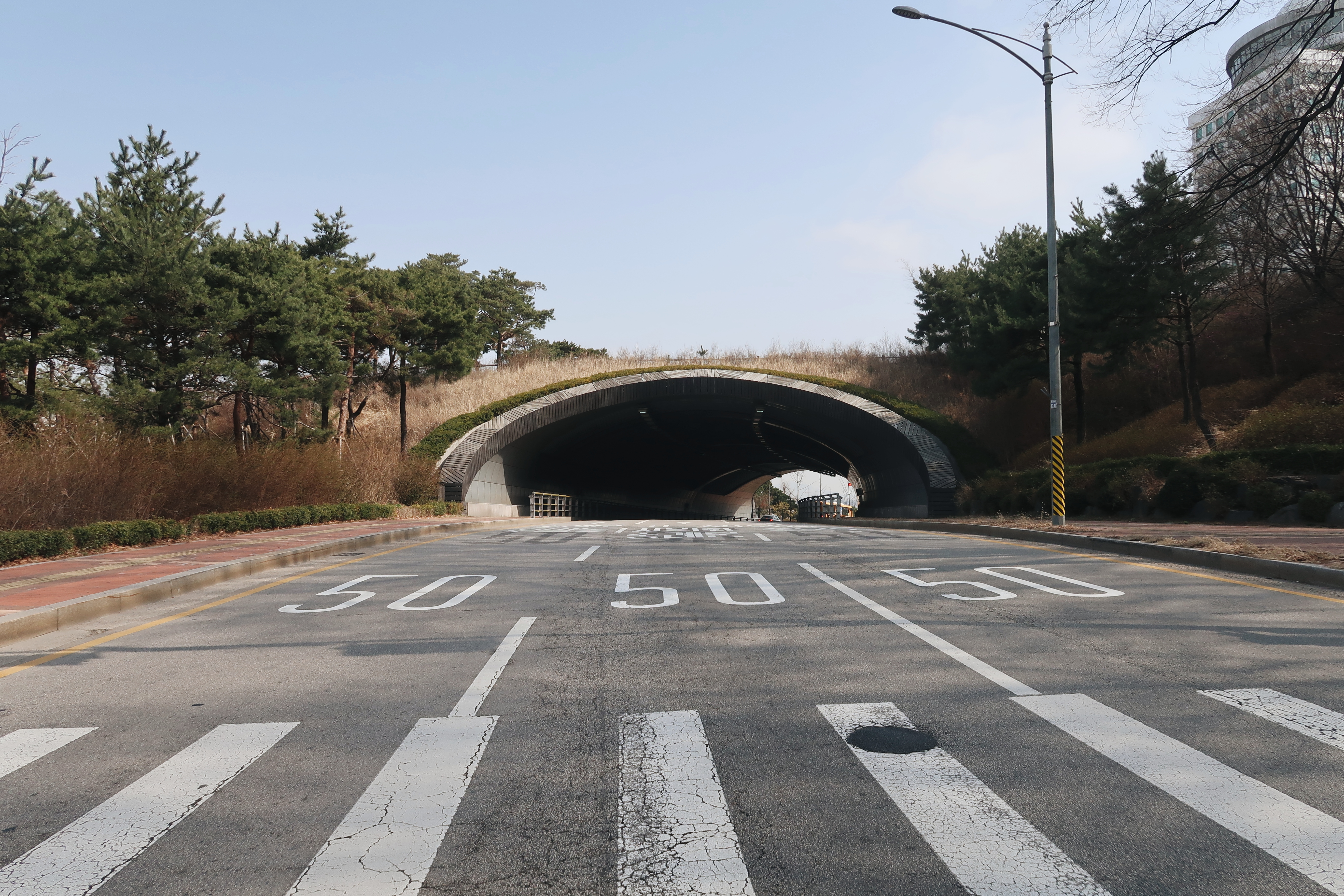 A photo of an empty road with an overpass that has grass on it (Seoul)