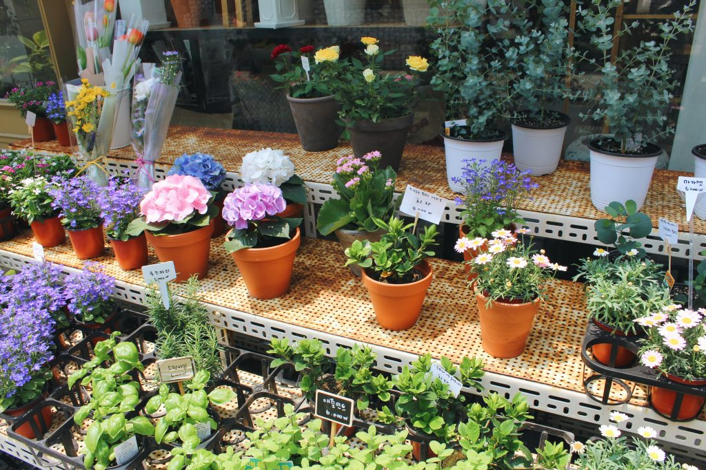 Flowers and plants on display in Ikseondong